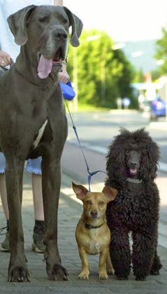 Hunde: Wurde die Intelligenz der Vierbeiner bisher unterschätzt?