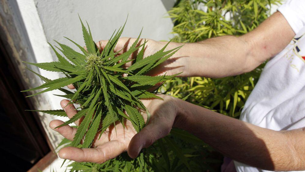 Legalisierung von Marihuana: Drogen-Versuchslabor Uruguay