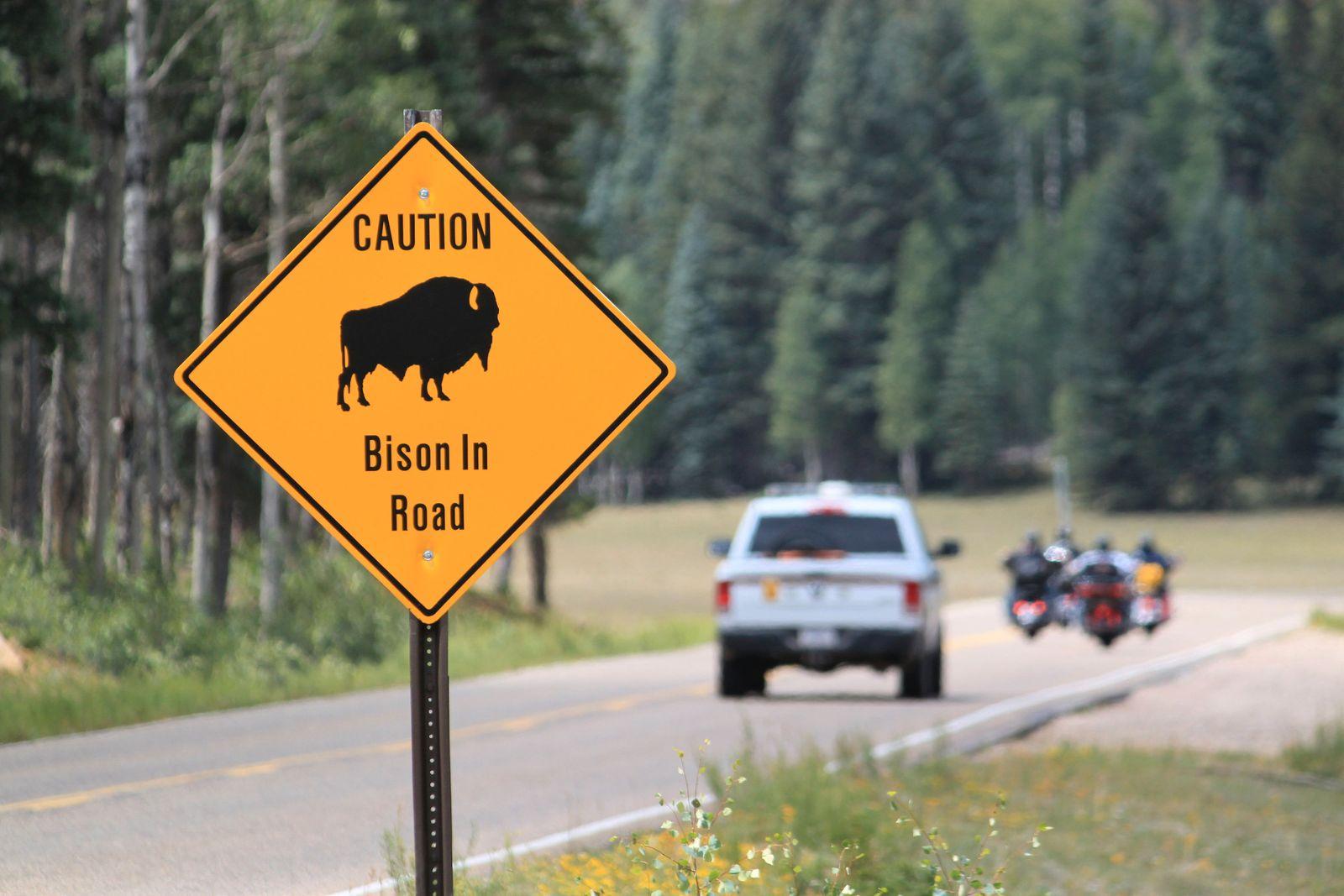 Grand Canyon Bison