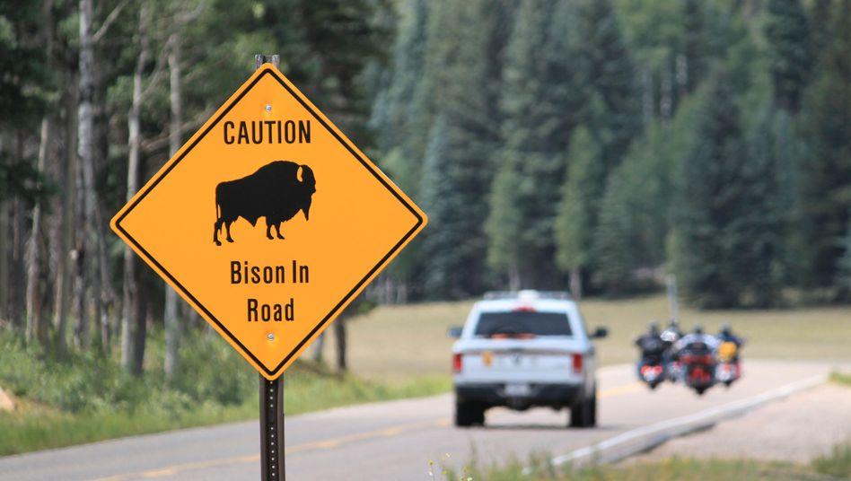 Warnschild im Grand Canyon National Park: Die Zahl der Bisons könnte sich hier in den nächsten Jahren mehr als verdoppeln