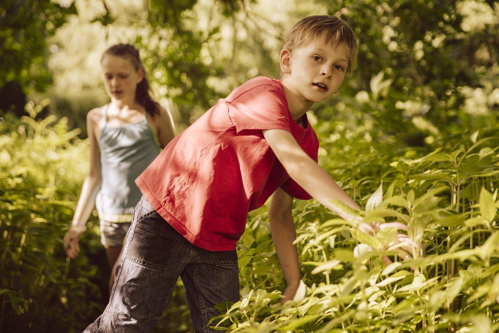 EINMALIGE VERWENDUNG Kinder / Wald