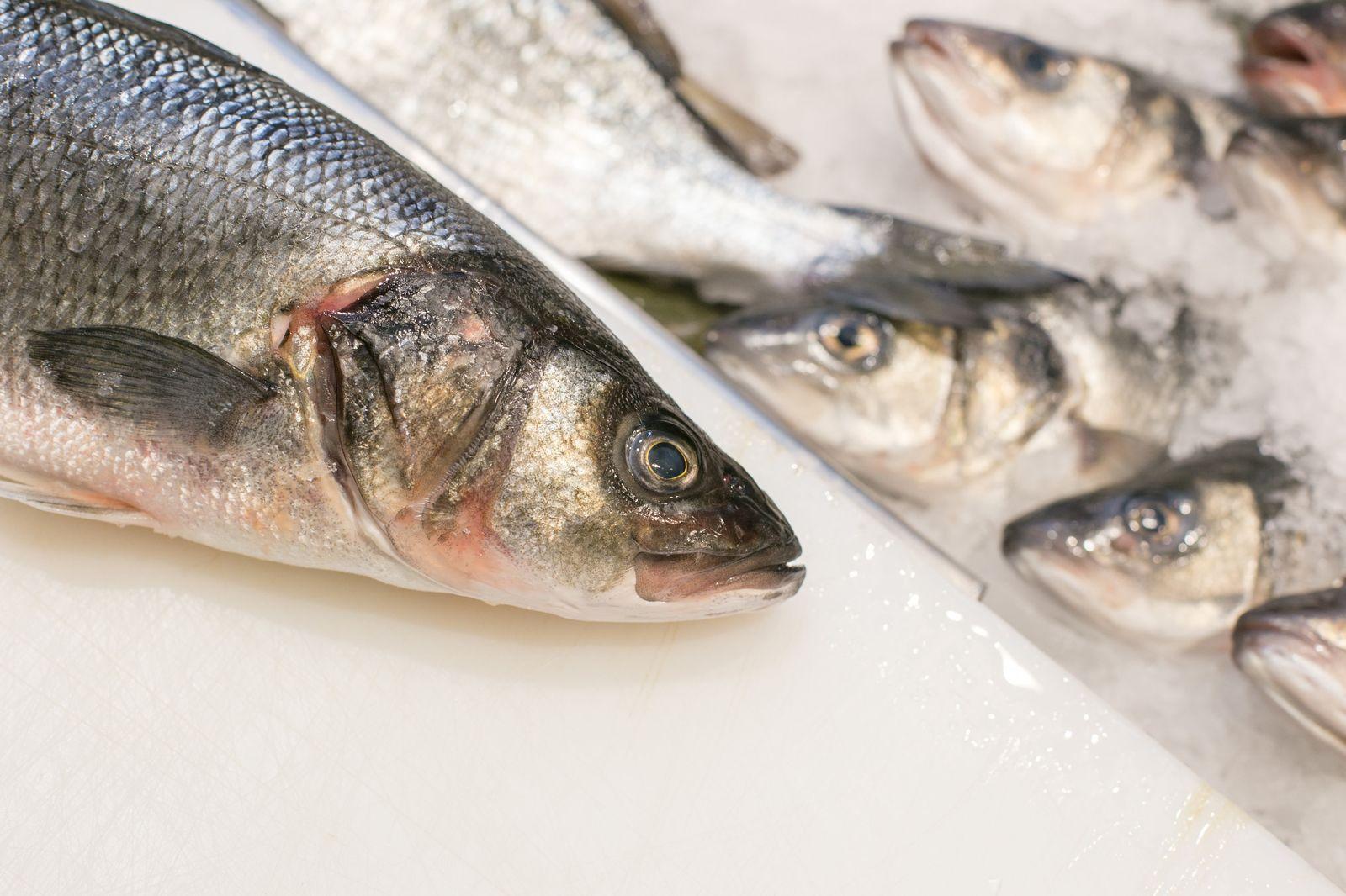 EINMALIGE VERWENDUNG Fisch ist gesund