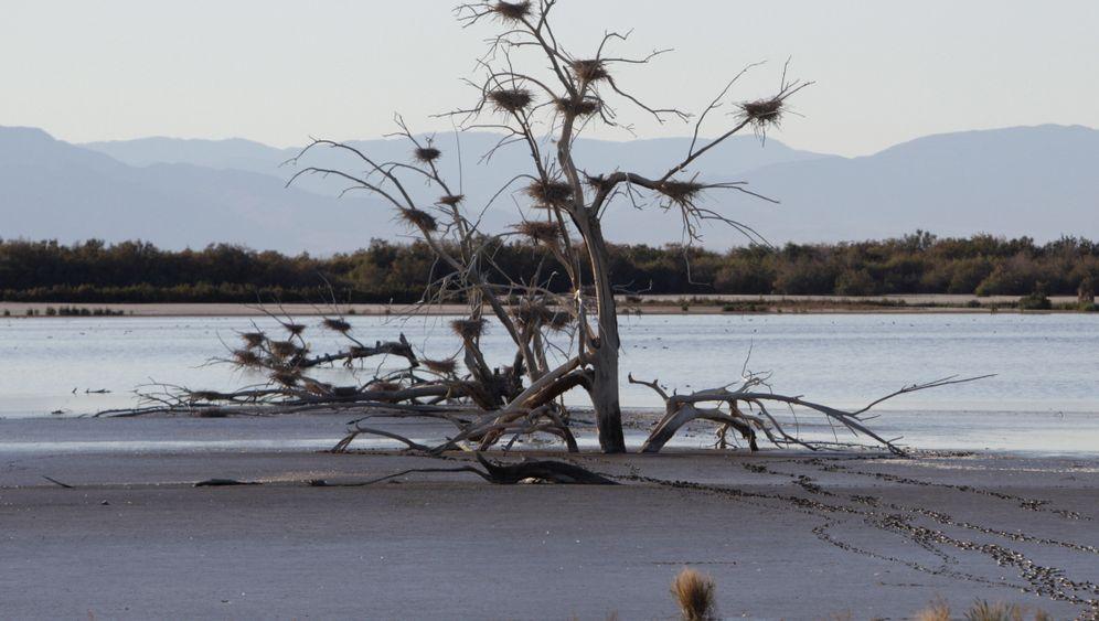 Salton Sea: Den Kaliforniern stinkt's