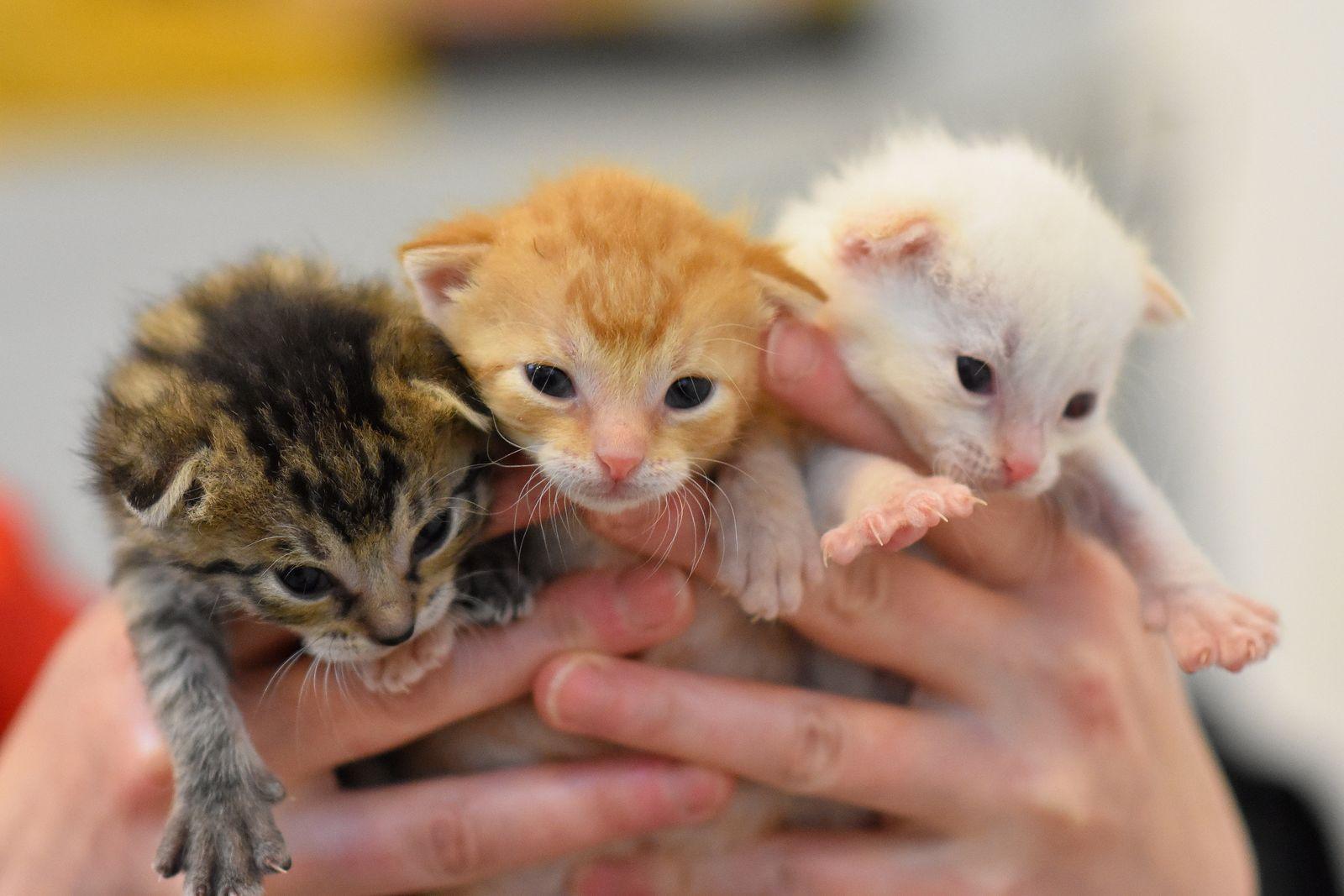 EINMALIGE VERWENDUNG Katzenkinder im Tierheim Berlin