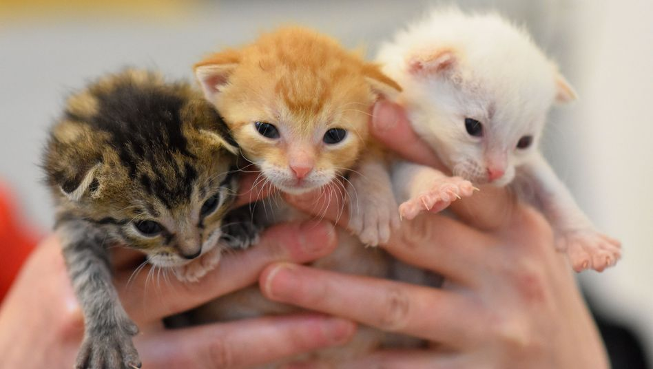 Die gefundenen Tiere sind etwa zwei Wochen alt