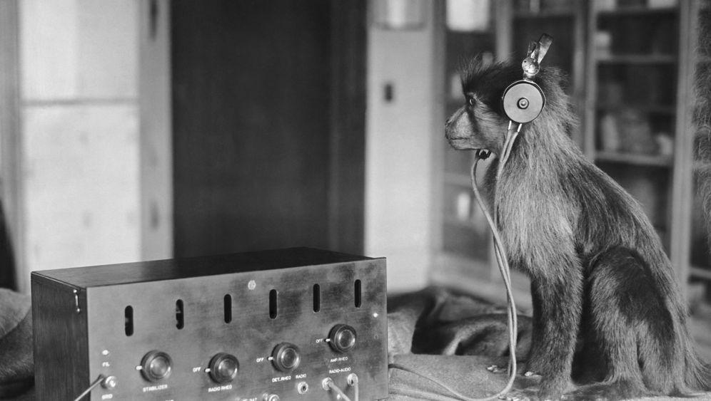 Evolution vs. Bibel: Das große Affentheater