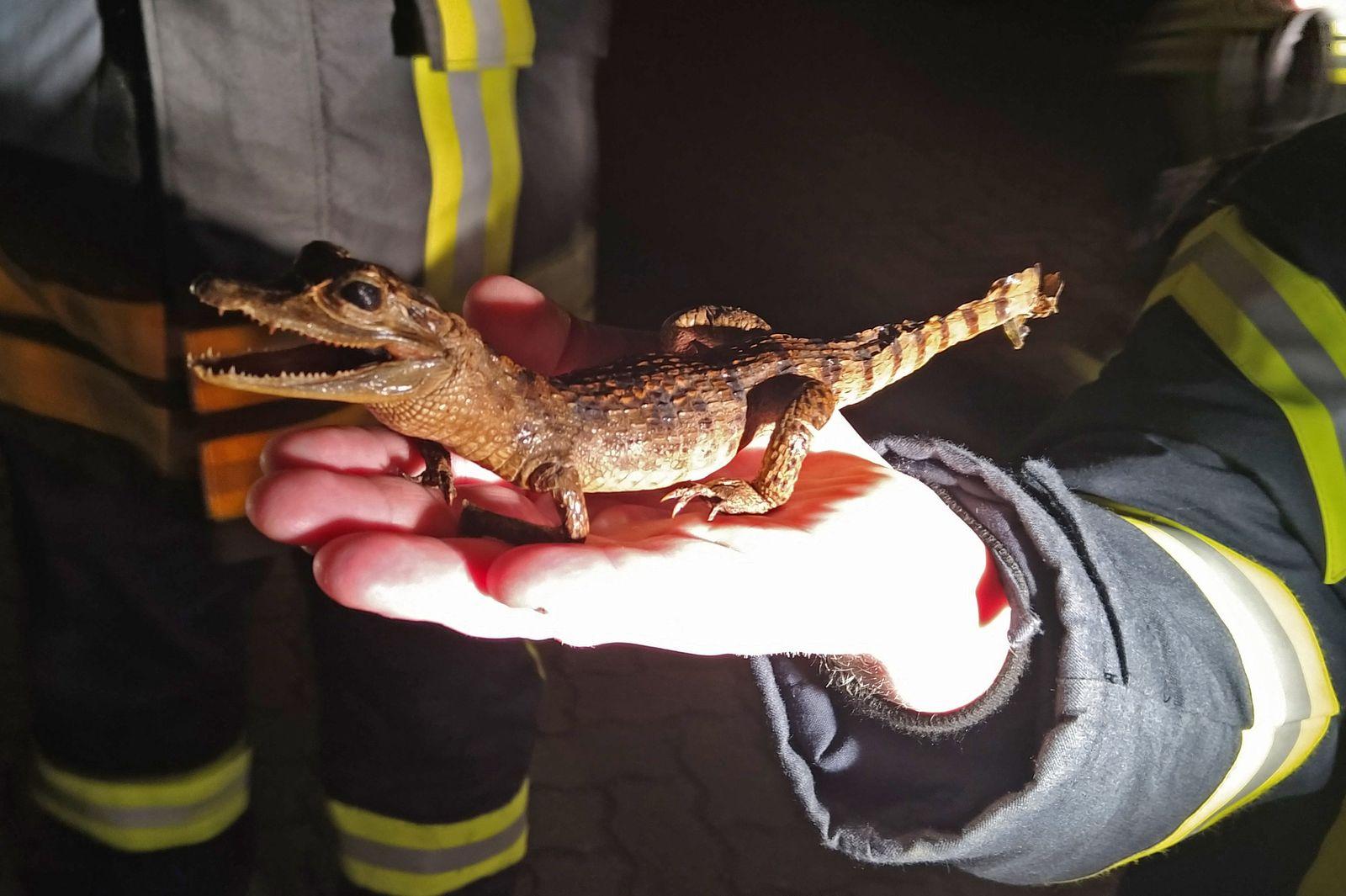 Präpariertes Krokodil im Garten alarmiert Polizei