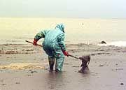 """Ölpest an der Atlantikküste: """"Frankreich-Bild wieder verbessern"""""""