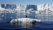 Vor Antarktis entsteht größte Meeresschutzzone der Welt