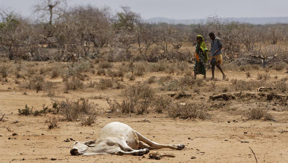 Rinderkadaver in Äthiopien (Archiv)