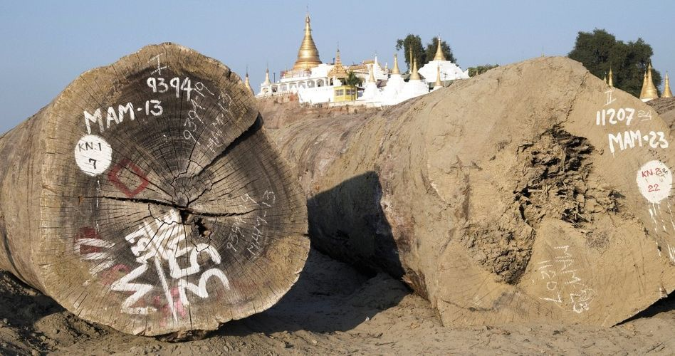 Tropenholzstämme bei Mandalay, Burma: Unabhängige Expertisen fehlen bis heute