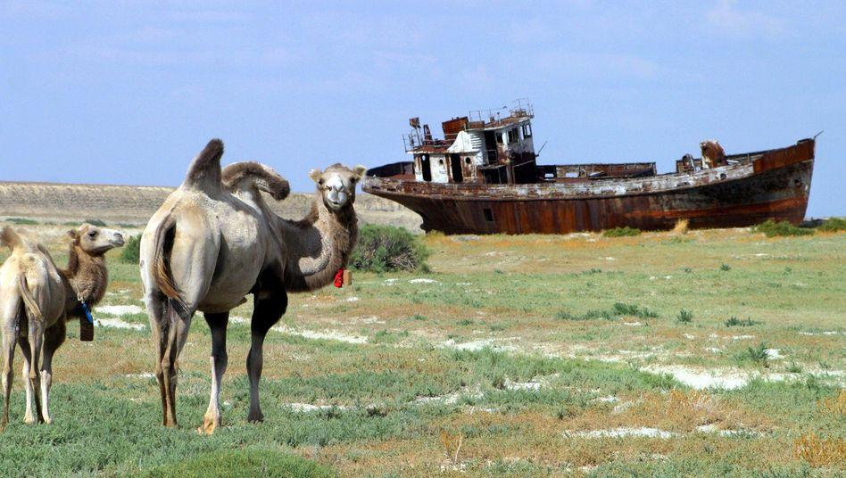Schiff und Kamele in ausgetrocknetem Gebiet: Drastischer Rückgang des Aralsees