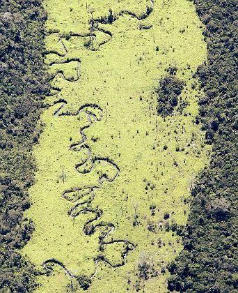 Abgeholzter Abschnitt des Regenwalds im Amazonasgebiet: Pflanzen produzieren Methan