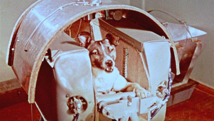 Kosmonauten mit Schlappohren: Die ersten vier Pfoten im Weltall