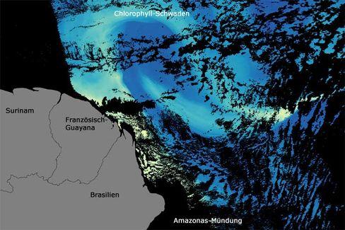 Nährstoffreiches Wasser aus dem Amazonas: An manchen Stellen gibt es besonders viel Chlorophyll (gelb), an anderen fast gar nicht (dunkelblau)