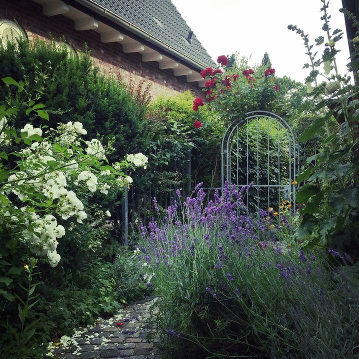 Der Lavendel im Juli: Hummeln baden in der lilablauen Pracht