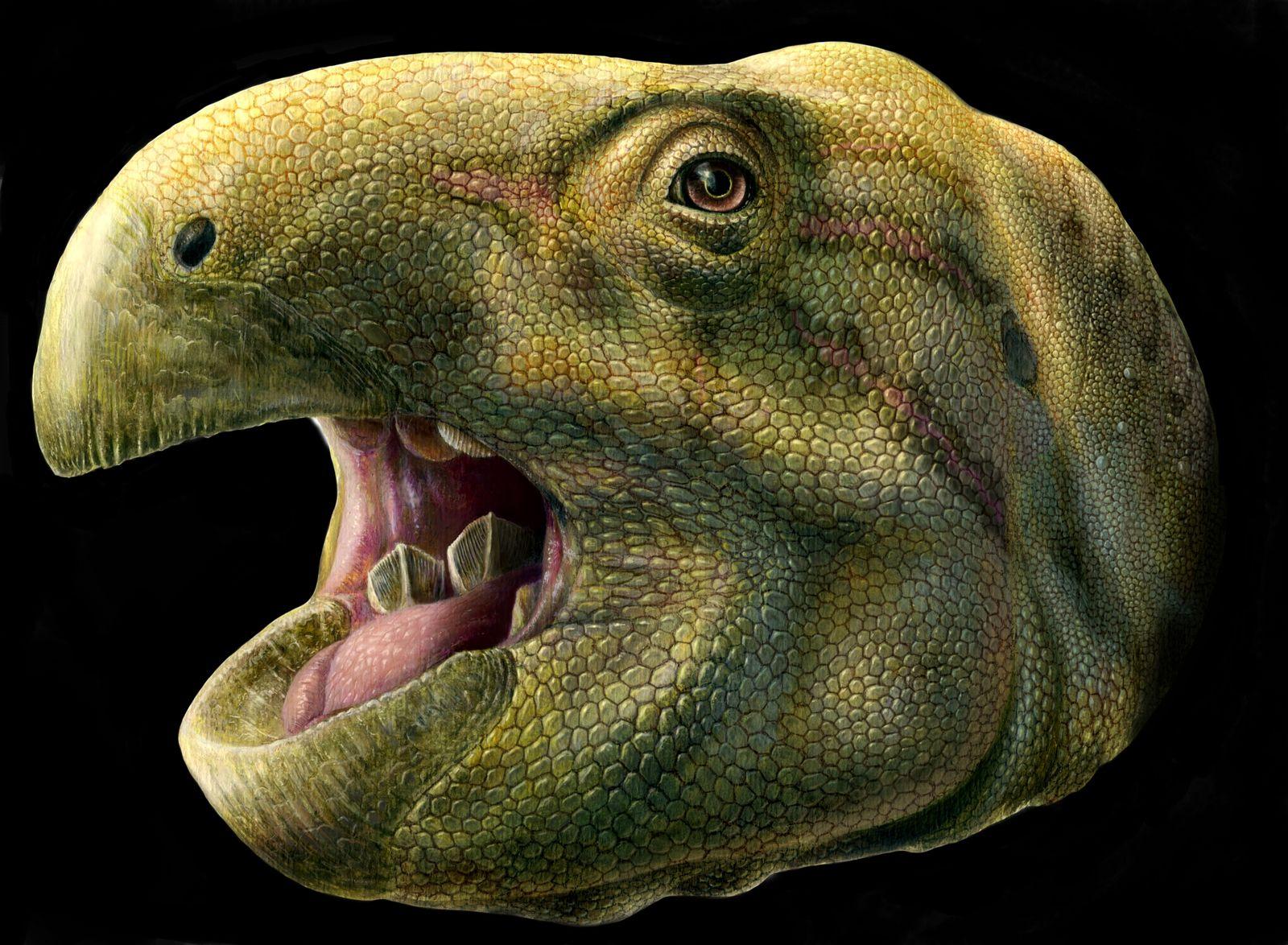 EINMALIGE VERWENDUNG EINMALIGE VERWENDUNG SPERRFRIST 26.10.2017, 15UHR Dinosaurier/ MatheronodonDinosaurier/ Matheronodon