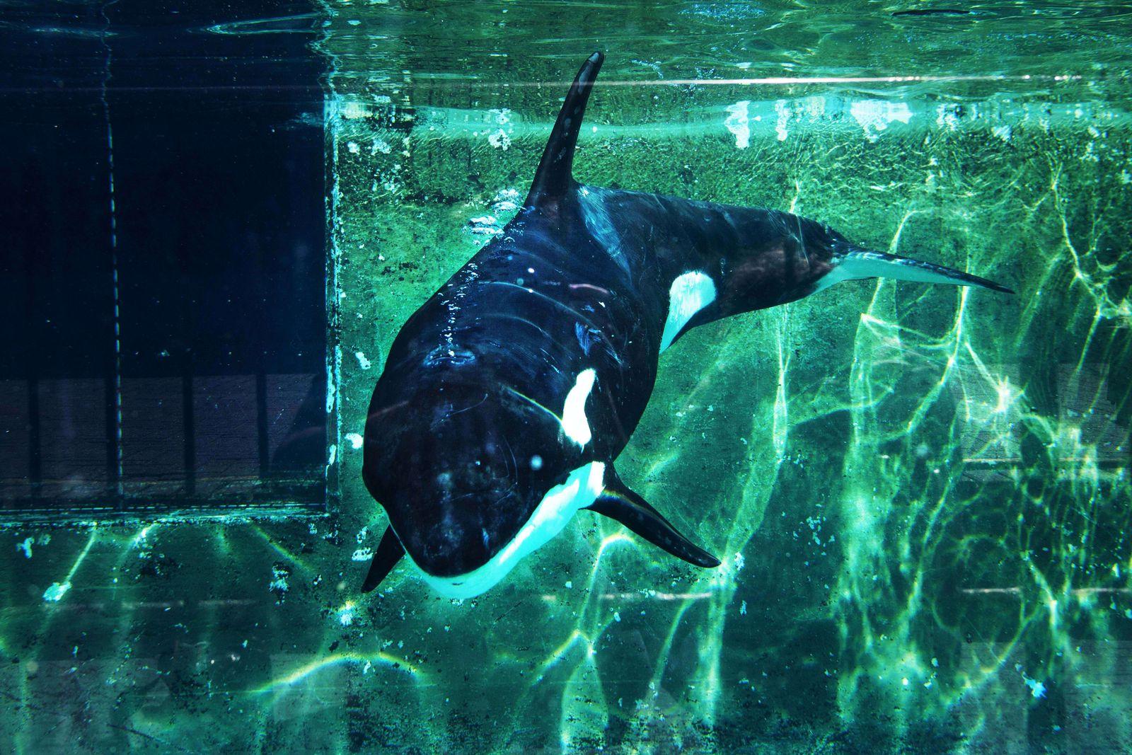 Orca Niederlande