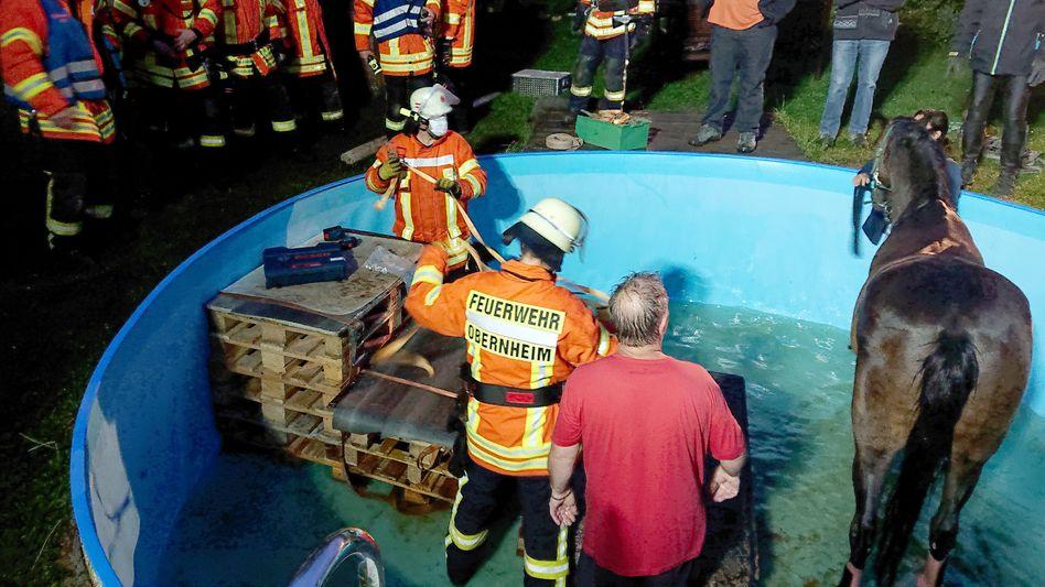Ungewöhnliche Rettungsaktion: Feuerwehrleute kümmern sich um ein Pferd