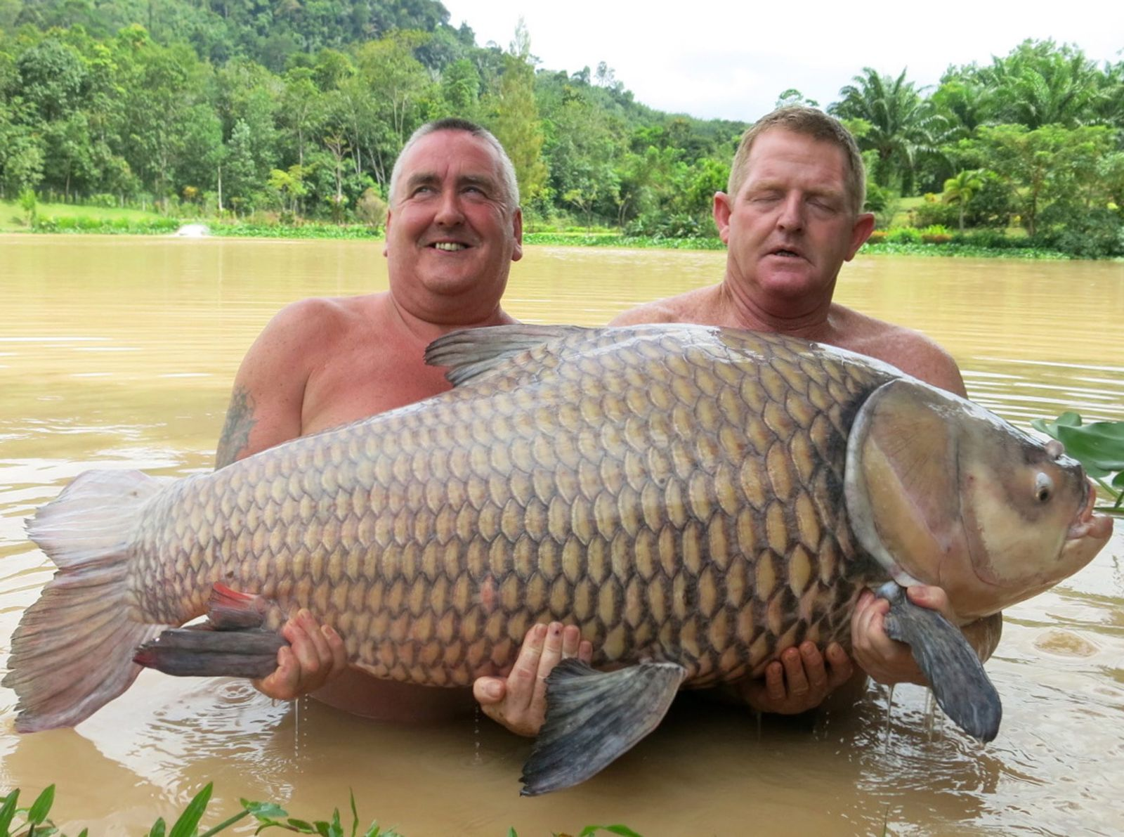 Thailand/ Großer Karpfen