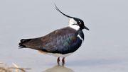 Vogel frei