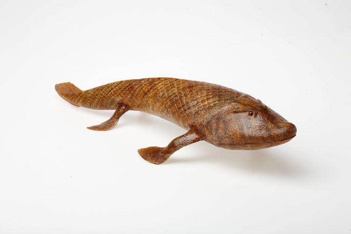"""Tiktaalik, der """"Prototyp"""" - ein Fisch mit Beinen: Rund 20 Millionen Jahre älter als Acanthostega stand dieser Flossenträger ganz am Anfang der Entwicklung zum Tetrapoden."""