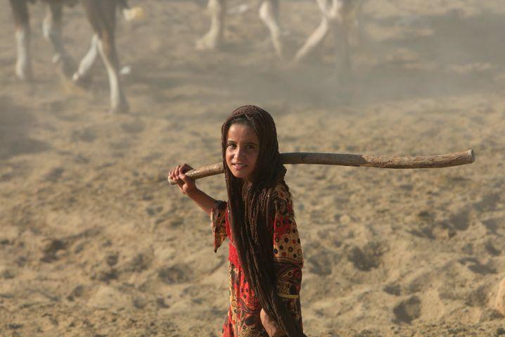 Ein irakisches Mädchen beim Hüten von Wasserbüffeln