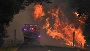 Behörden untersuchen Klimawandel als Ursache für Buschbrände