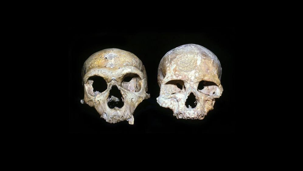 Aussterben Neandertaler