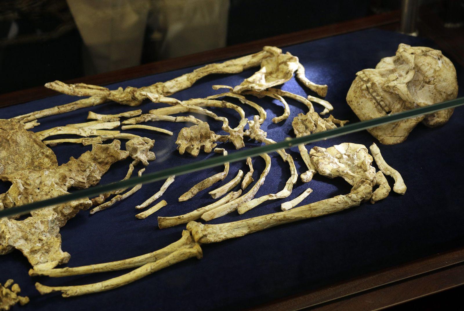 Australopithecus Little Foot / Südafrika