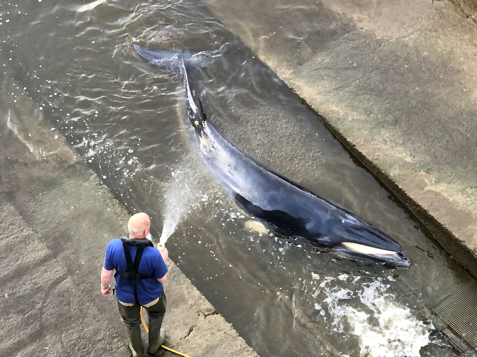 A small whale stranded in the River Thames is seen in this picture obtained from social media in London, Britain