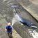 Wal aus Londoner Schleuse befreit