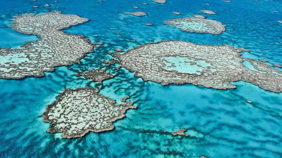 Luftaufnahme des Great Barrier Reefs (Archivbild)