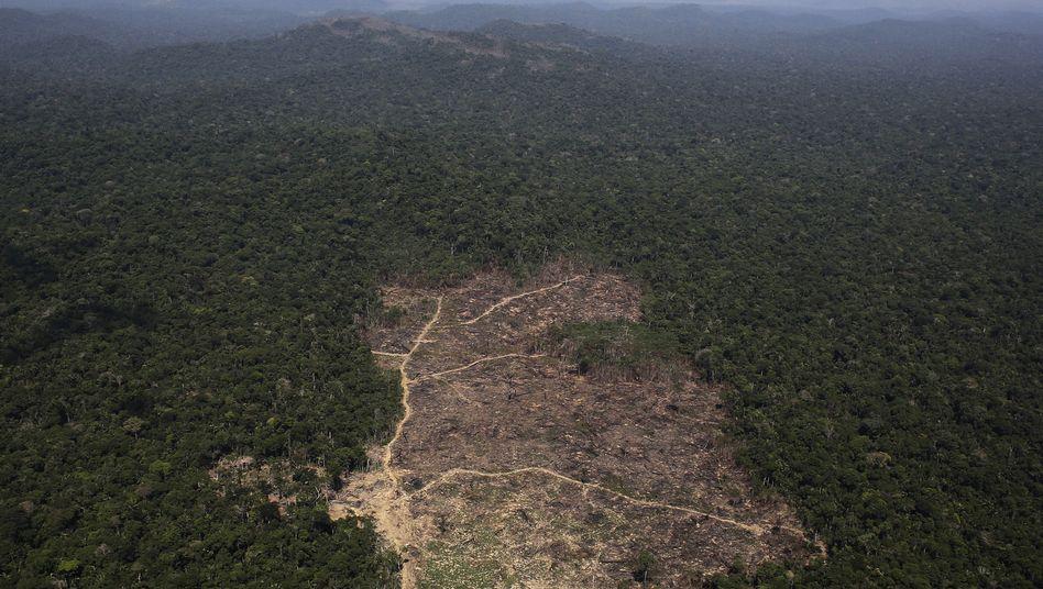Brasilianischer Regenwald: 14 Millionen Hektar ungeschützter Regenwald, geeignet zum Sojaanbau