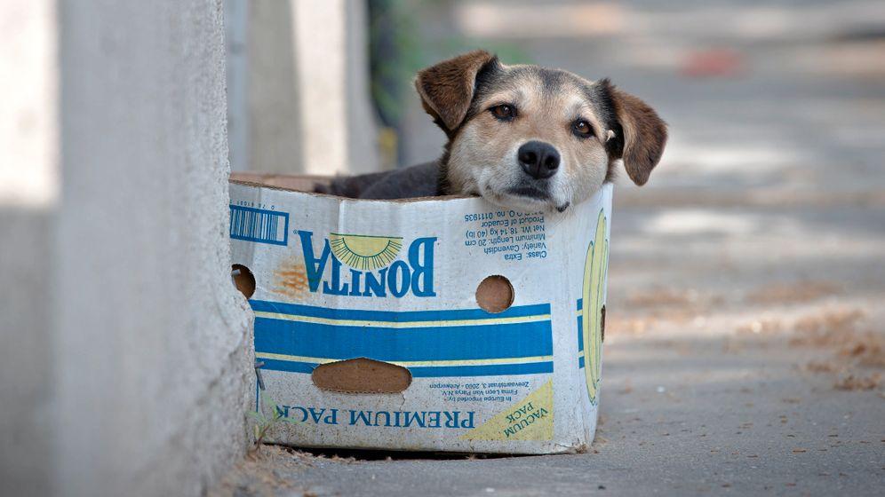 Bukarest: Hunde, wollt ihr ewig leben?