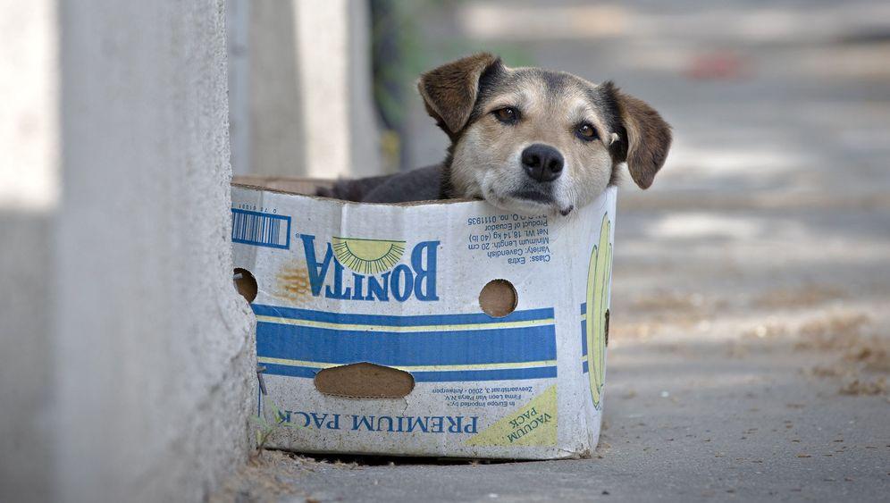 Straßenhunde in Rumänien: Vorwand für Massentötungen?