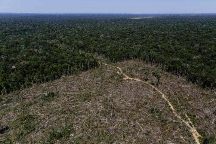 Schneise im brasilianischen Regenwald (2017)