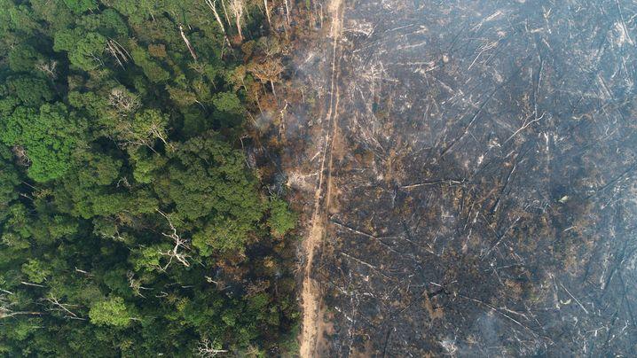 KI-Werkzeuge können Muster in riesigen Datenmengen aufspüren – wie Umweltzerstörung in Regenwäldern
