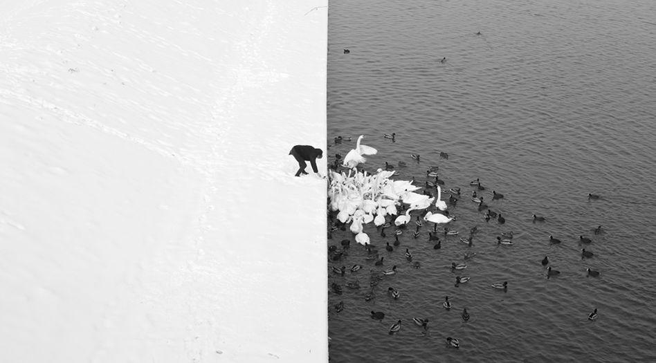 """Klarer Kontrast aus Schwarz und Weiß: """"Ein Mann füttert Schwäne im Schnee"""""""