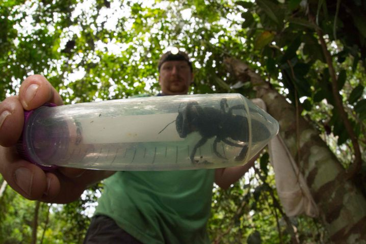 Eli Wyman mit der Riesenbiene