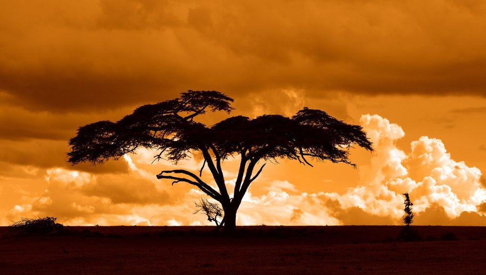 Hemingways Afrika: Bruchlandung in der Steppe
