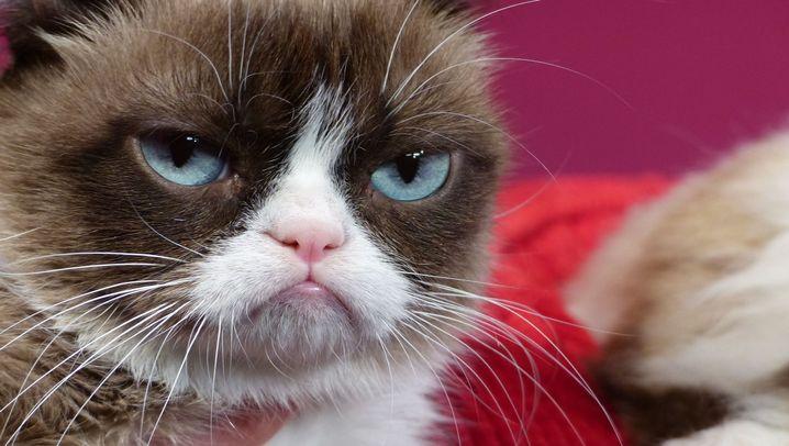 Die bekannteste Netz-Katze: Das Leben von Grumpy Cat