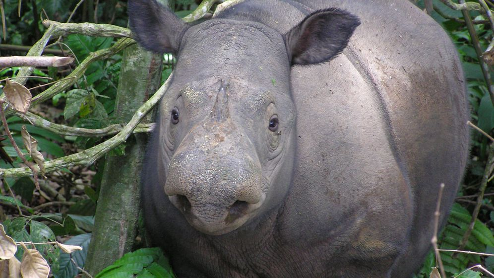 Zoos: Letzte Zuflucht im Gehege