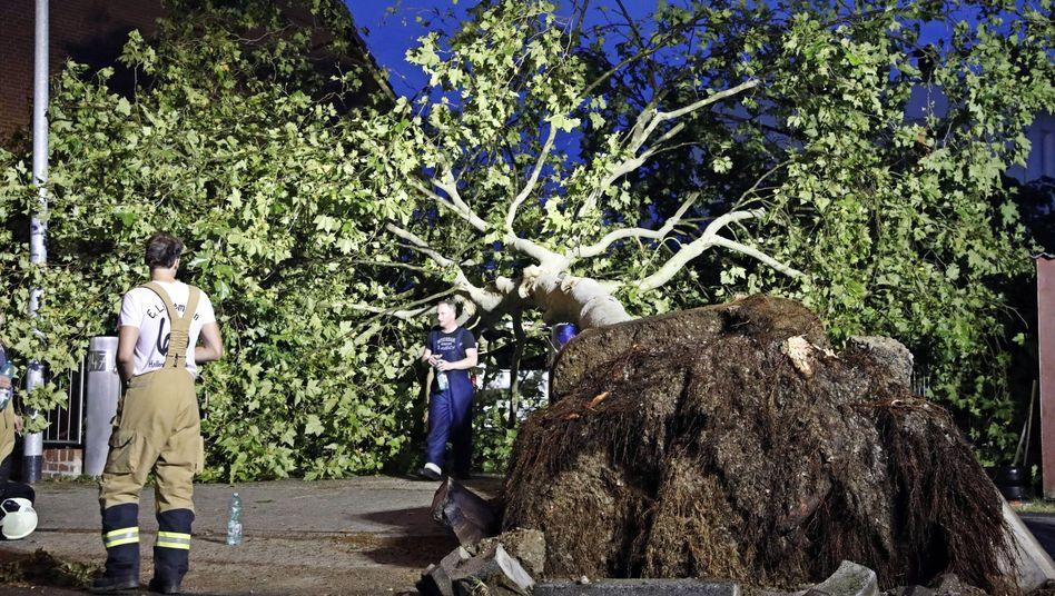 In Hilden im Kreis Mettmann wurde am Freitag dieser Baum entwurzelt. Ein Unwetter war über den Ort hinweggezogen.