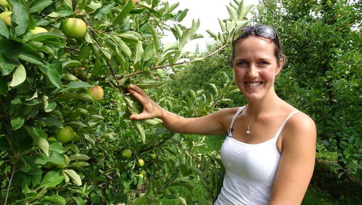 Altes Land: Sonnenschutz für Obst gesucht