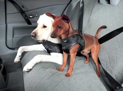 Sicherheitsgeschirr für Hunde: Sitz, brav und schön anschnallen!