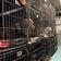 Kölner Behörden stoppen illegalen Tiertransporter aus Südeuropa