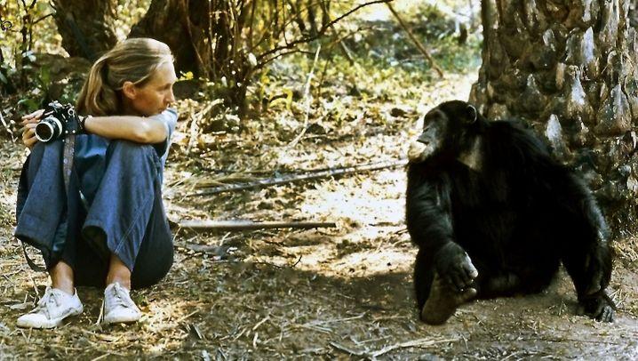 Jane Goodall: Von der Sekretärin zum Popstar