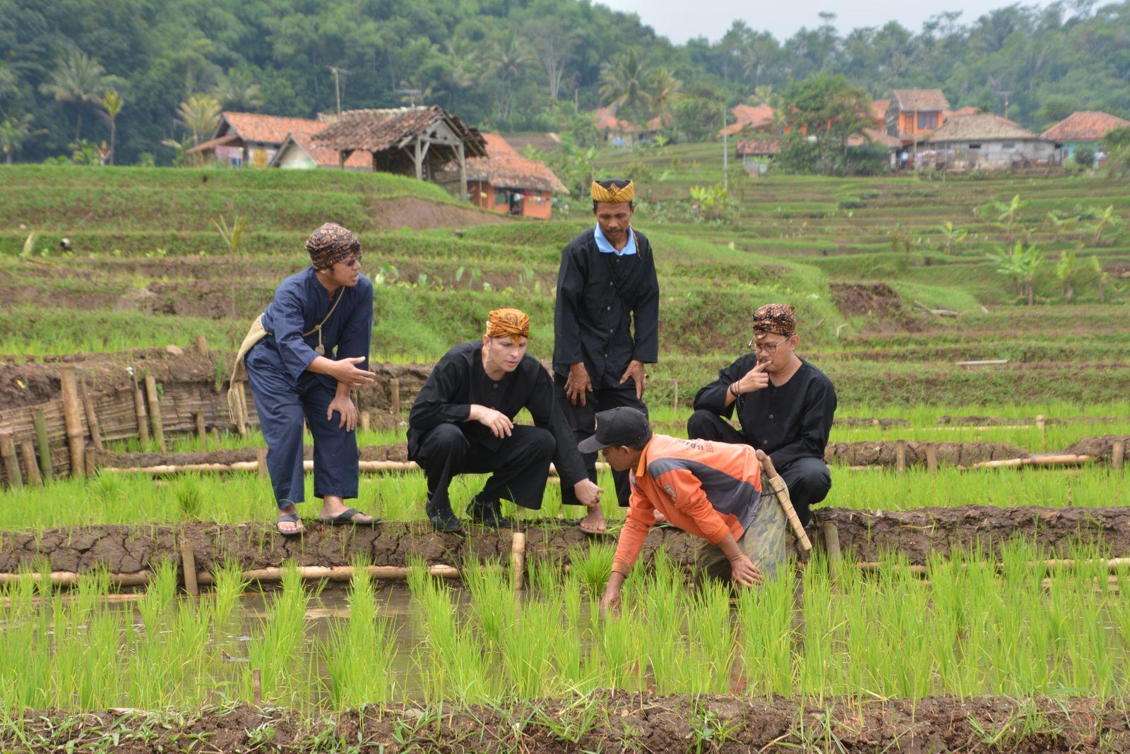 Reisbauern5