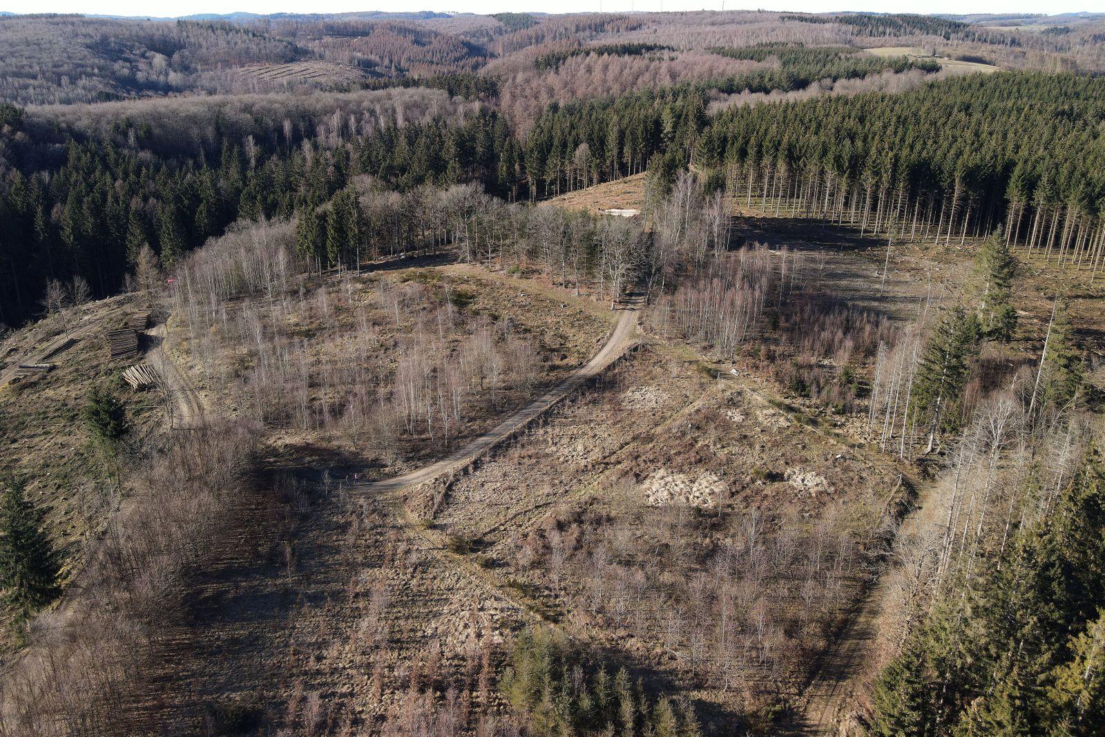 Waldsterben im Februar 2021, 28.02.2021 Waldsterben im Februar 2021, 28.02.2021 Freudenberg Siegerland Deutschland ***
